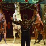 Circus William 13 - Pferdedressur